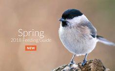 Bird Food, Animals, Animales, Animaux, Animal, Animais