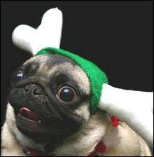 Pugs♥