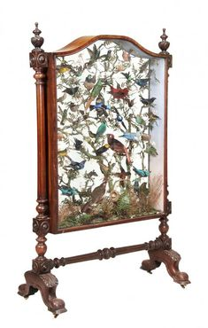 early Victorian walnut and glass-cased shadow box fire screen with taxidermy birds