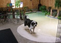 Restful Paws Bed and Breakfast & Pet Resort