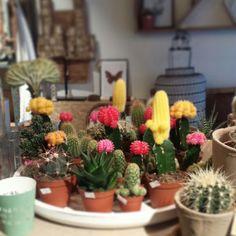 Cactus. Via Lijn M - For Now (www.lijnm.com)