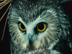 Learn about nocturnal animals in a Science Curriculum for Preschool and Kindergarten with 75 free complete lesson plans online Science Curriculum, Kindergarten Science, Owl Preschool, Kindergarten Classroom, Nature Activities, Science Activities, Animals For Kids, Cute Animals, Wallpaper Gratis
