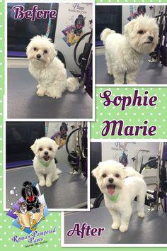 Sophie Marie