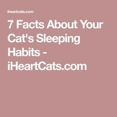 7 Facts About Your Cat's Sleeping Habits Feral Cats, Muriel, Cat Sleeping, Big Cats, Facts, Lions, Tigers, Tiffany, Tattoos