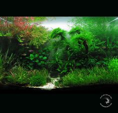 Aquarium Blog: Coletanea de Layouts para Aquarios Plantados