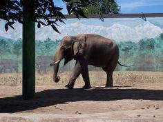 RGZ - Asian Elephant | Flickr - Photo Sharing!