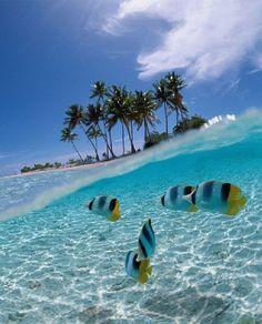 Sulawesi island,Indonesia:
