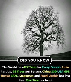 Trees per person Save tree Save nature save future Wierd Facts, Wow Facts, Intresting Facts, Real Facts, Wtf Fun Facts, True Facts, Funny Facts, Fun Facts About Life, Interesting Facts About World