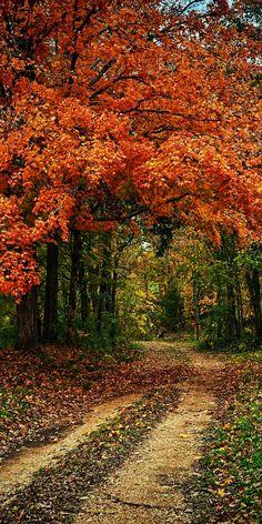 Dillard Mill Path (Missouri) by Aaron Fuhrman on 500px cr.c.