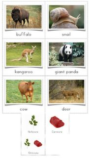 The Helpful Garden: Herbivore, Carnivore, Omnivore Sorting Cards