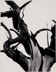 Ansel Adams, 'Dead Tree, Sunset Crater National Monument, Arizona', 1947