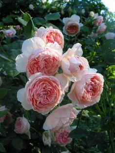 Compagnia del Giardinaggio: William Morris