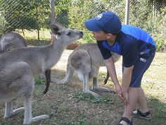 I love kangaroos and hopping around makes me laugh.