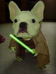 Yoda custome french bulldog