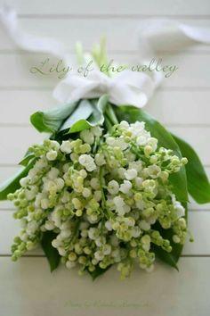♡♡♡ Des Lilies pour ma Lilie