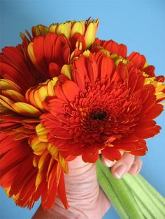 Simple trick for making a fresh daisy topiary  #make #craft skiptomylou.org