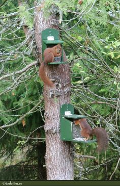 squirrel feeder! Maybe then they'll stay out of my bird feeder