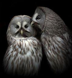 Owls talk by Lilia73