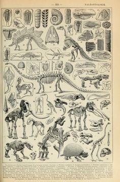 Aspect de différents squelettes scannée depuis le Larousse - 1922 Paleontologie - Larousse - 1909