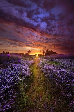 A Peaceful Proposition by Phil Koch - Photo 162624853 - 500px