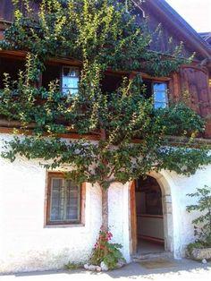 Bakancslistás látnivalók Hallstatt hegyei és házfalakra növő csodás gyümölcsfák | Sokszínű vidék