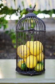 Yellow Wedding Ideas Thinking this would look great in our new Aldridge Wire Cloche!Thinking this would look great in our new Aldridge Wire Cloche! Lemon Kitchen Decor, Kitchen Decor Themes, Home Decor, Bird Cage Centerpiece, Bird Cage Decoration, Shabby Chic Salon, Bird Cages, Yellow Wedding, Floral Wedding