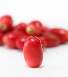 Miracolina: la bacca miracolosa che minaccia le multinazionali dello zucchero