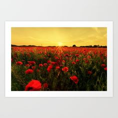 #society6 #art #print #flowers #poppies #red #sunset #landscape #shop #shopping