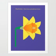 Daffodil Art Print by Christopher Dina - X-Small Flower Outline, Flower Art, Plant Illustration, Botanical Illustration, Star Master, Watercolor Plants, Drawing Board, Daffodils, Vector Art