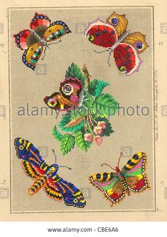 Βερολίνο μαλλί Μοτίβο Εργασία σκώροι και πεταλούδες Στοκ Εικόνες, Royalty Free Image: 41494270 - Alamy