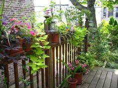 The Outsider: Perennial Power in Windsor Terrace   Brownstoner