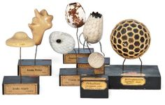 Seven Plaster Models of Single-Celled Organisms / Vaclav Fric, Prague Thinking In Pictures, Ways Of Seeing, Sculpture Clay, Office Art, Science Art, Old Master, History Museum, Natural History, Plaster