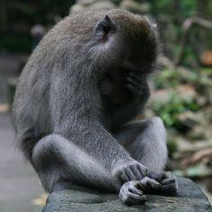 Where the world is going on ? #monkey #ubud #bali #jungle #asia #indonesia
