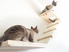 This piece is made up of two shelves attached by a cat ladder. One shelf is 26 long and the other is 18 long. Each shelf is 11.25 wide. Its