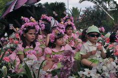 Flower Festival 2013 - Madeira Island