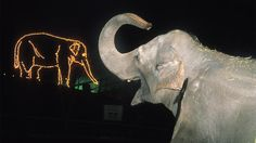 """Ride through the <a href=""""http://www.oregonzoo.org/visit/zoolights"""" target=""""_blank"""">Oregon Zoo</a> in twinkling style aboard the ZooLights train, past more than a million sparkling lights. You'll see tunnels of light near the African Rainforest and can warm up with hot chocolate and the zoo's signature elephant ear treats from vendors along the ZooLights path."""
