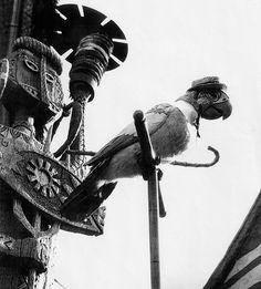 Enchanted Tiki Room Barker Bird 1960s - Disneyland