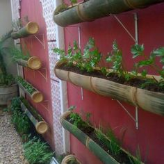Save space by growing your herb garden on the wall in bamboo poles.
