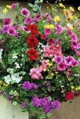 Buy Traditional Basket Mix Baskets and containers overflowing with brilliantly coloured plants are found adorning country cottages and pubs around the British Isles and this brilliantly colourful mix was inspired by those traditional displays. Garden Planters, Planter Pots, Traditional Baskets, Hanging Baskets, Planting Flowers, Outdoor Living, Create, Flower Containers, Plants