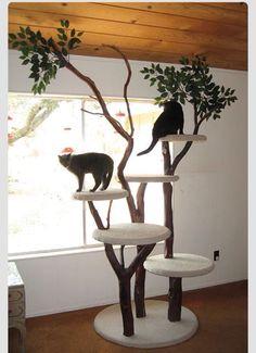 #cat #tower #cattree