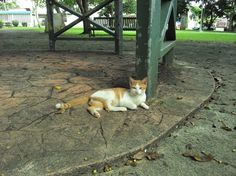A cat from Guaynabo.