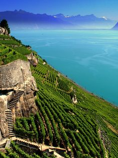 The Lavaux vinyards cascading down to Lake Geneva, between Lausanne and Vevey, Switzerland.