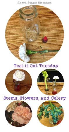 Short Stack Stitches - Test it Out Tuesday Stems, Flowers, and Celery science experiment for kids.