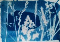 'Beyond the meadow', Cyanotype print | Flickr - Photo Sharing!