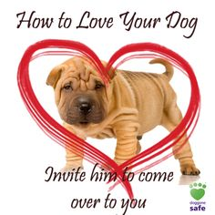 Love your dog by giving him attention on his terms. Teach kids to invite him over for treats and petting. They should leave him alone if he tries to get away from them.  http://doggonesafe.com/valentines_tips