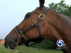 Horses Branded as Vicious Animals