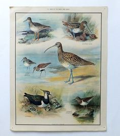 Vintage educational wall chart - No 10 - Birds of the Marsh and Heath British Schools, Nature Posters, School Posters, Vintage School, Sale Poster, Bird Design, Vintage Christmas Cards, Poster Wall, Beautiful Birds