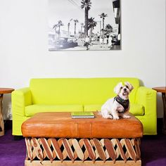 25 BOLD Ways To Do Color In Your Apartment #refinery29  http://www.refinery29.com/colorful-decor#slide-1  Never have neon yellow and royal purple been in such a loving relationship.