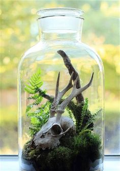 Marten likes to mix found or unusual objects with houseplants in his    terrarium. This one features a small skull.