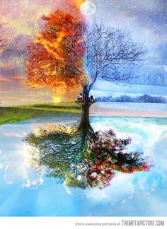 One Tree, Four Seasons#Repin By:Pinterest++ for iPad#